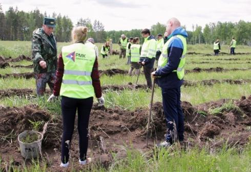 РМК посадила в Томинском 66 тысяч молодых деревьев