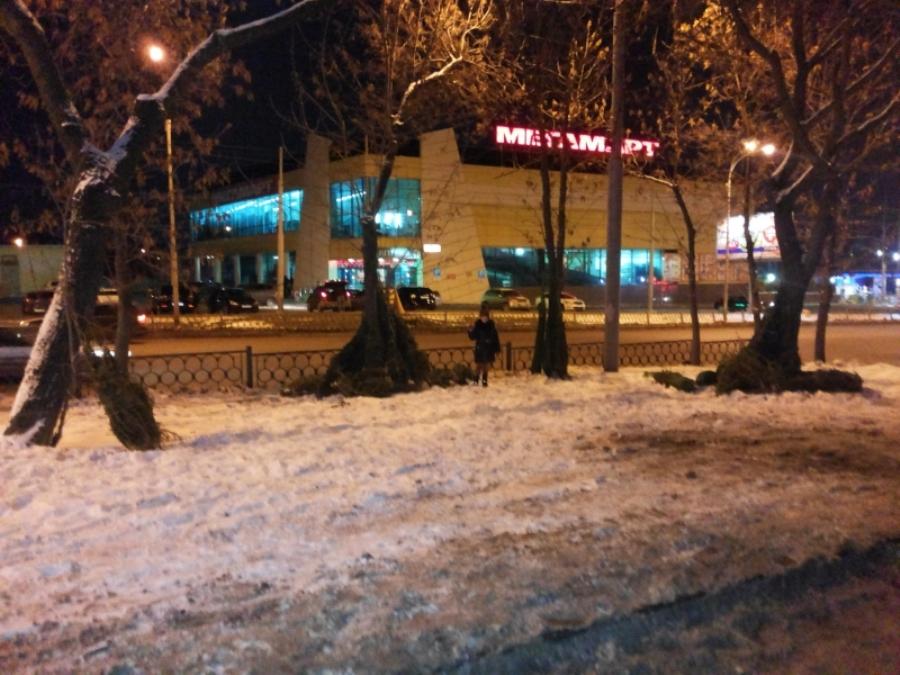 Свалки из «живых» деревьев устраивают торговцы новогодними елями в Екатеринбурге